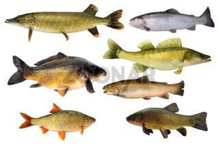 Fische 147