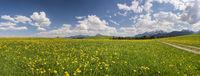 Panorama Landschaft im Allgäu bei Füssen mit Blumenwiese im Frühling