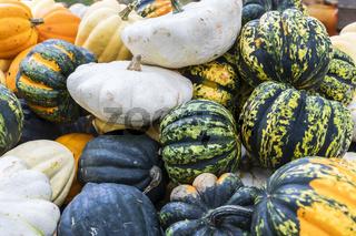 Kurbis Sorten Patisson, Sweet Dumpling, Accorn und Halloween