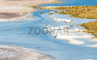 Chile Atacama desert flamingos in the water lagoon