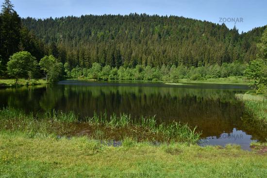 Sankenbachsee beim Baiersbronner Sankenbachsteig im Schwarzwald; Genießerpfad;