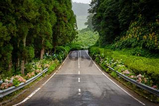 Landstraße auf Sao Miguel mit vielen blumen und Wald