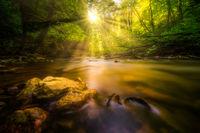 Sonnenschein an einem Fluß im Wald