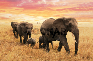 Elephant family on path in savanna in africa. Travel, wildlife and environment concept.