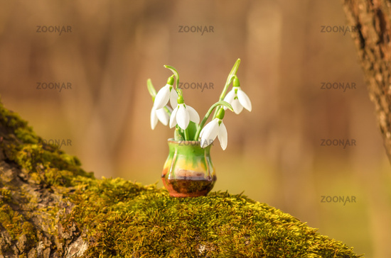 Snowdrop spring flowers. Still life with snowdrops on a sunny day. Snowdrops and sunshine.