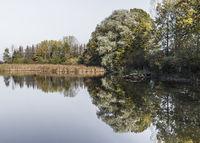 Bäume spigeln sich im See