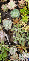 Abstract Overhead of Various Succulent Plants At Nursery