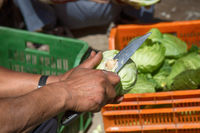 trade in vegetables, selling cabbage