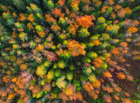 aerial view of autumn forest