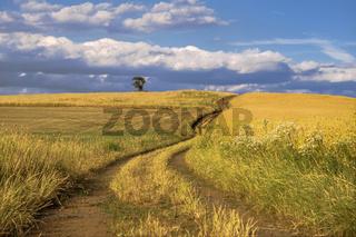 Der Weg durch die Felder