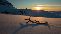 Golden sunset with reindeer antlers lying in the snow