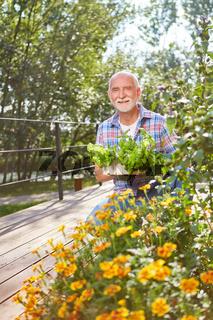Senior auf dem Balkon mit Blumen und Basilikum