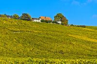 Weinberg in Herbstfärbung im Weinbaugebiet La Côte, Bougy-Villars, Waadt, Schweiz