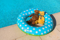 Two toy bears floating in swimming pool