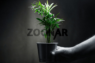 Male human hand holding a green plant. Environment and ecology concept.