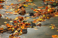Bach mit Steinen und Herbstlaub