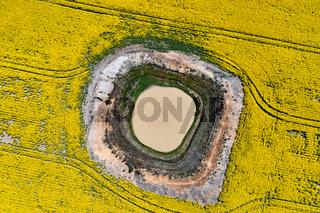 Aerial canola field views down onto diminishing waterhole