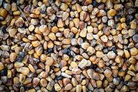 Nahaufnahme alter Mais, Maiskörner