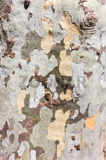 Details tree trunk bark surface as background