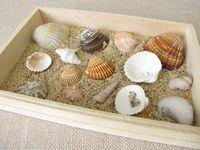 Muscheln, Schnecken und Sand vom Strand in einer kleinen Holzkiste