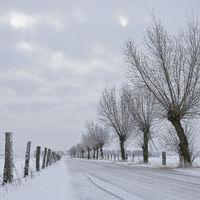 von Kopfweiden gesäumt... Bislicher Insel *Nordrhein-Westfalen* im Winter