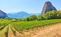 Vew of vineyard near Kastraki village in Greece