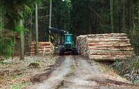 Holz wird auf Transportfahrzeug verladen