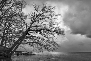 Lichstimmung am Ufer des Ruegischen Boddens
