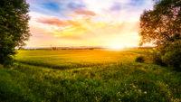 Sonnenaufgang über einem Getreidefeld