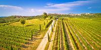 Istrian vineyard region aerial view. Town of Buje green landscape panorama
