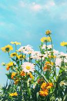 Summer flowers against a blue sky