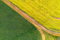 Fields of green and gold background abstract
