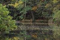 Teich im Odenwald