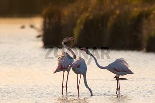 Flamingos an der Algarve Portugal