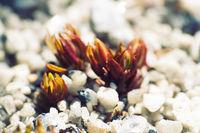 Microscopic plants among white quartz sand