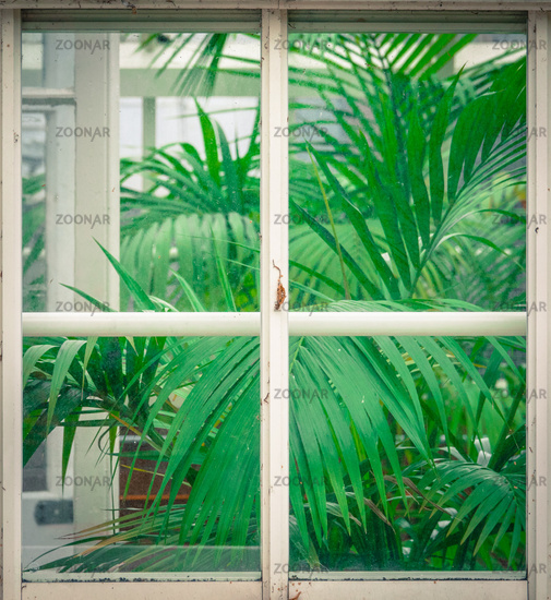 Vintage Greenhouse With Palms