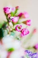 Rote Blüte mit schwacher Tiefenschärfe