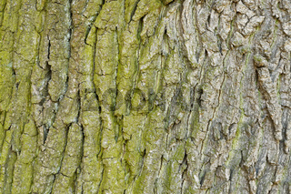 Abstract old wood tree bark texture background