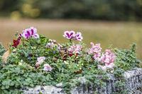 bunte Blüten im Garten