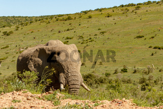 Elephant walking on the side