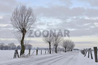 unterwegs auf der Bislicher Insel... Niederrhein *Xanten* im Winter