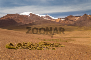 High desert with snow capped mountain peaks in the background