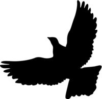 Concept of love or peace silhouettes doves