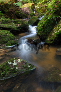 Mountain creek meandering through mossy rocks and ferns