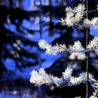 Frost, Light and Shadow