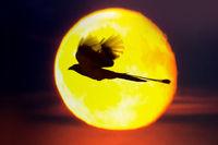 Fabulous night bird on background of moon disk