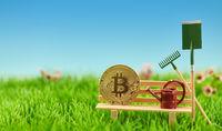 Bitcoin Münze auf Bank als Wachstum Konzept