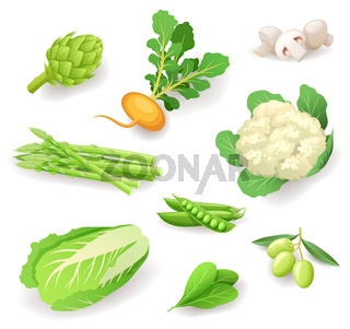 Fresh organic vegetables icon set isolated, healthy food, artichoke, turnip, mushrooms, asparagus, cauliflower, peas, olives, Chinese cabbage, spinach, vector illustration.