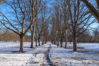 Oslo winter landscape at Vigeland Sculpture Park with snow and dry tree