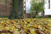 Herbstlaub und Baumstamm